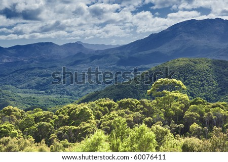An image of the australian rain forest - stock photo