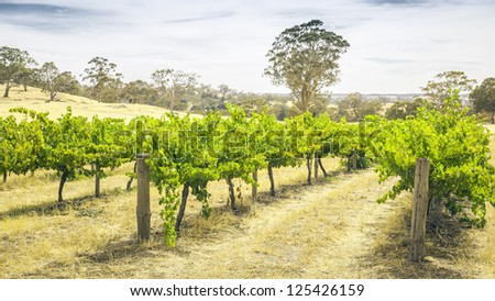 An image of the Barossa Valley landscape in Australia - stock photo