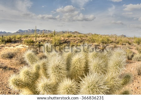 An image of the cholla cactus at Superstition desert in Arizona shows the rugged detail of a dry wilderness - stock photo