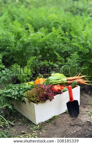 An image of vegetables in a wooden crate - stock photo