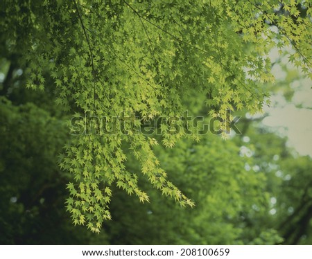 An image of Verdure