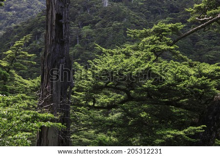 An Image of Virgin Forest