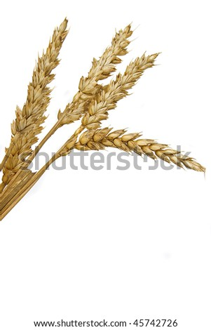 An image of  wheat spikes over white background