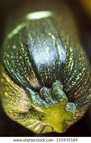 an image of zucchini close-up