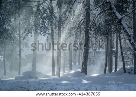An incredible beautiful stunning fabulous snowy forest in a fog illuminated by sunlight