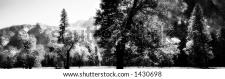 An infrared panoramic shot taken in Yosemite Valley. Image has a grainy, dreamlike feel to it because of the infrared processing. - stock photo