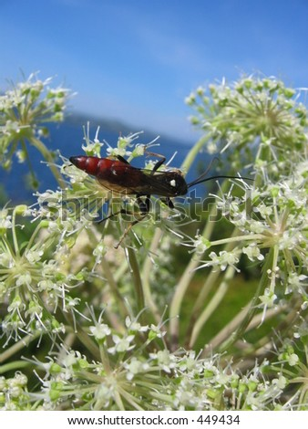 An insect on a flower - stock photo