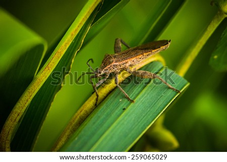An insect on the green plants, close-up - stock photo