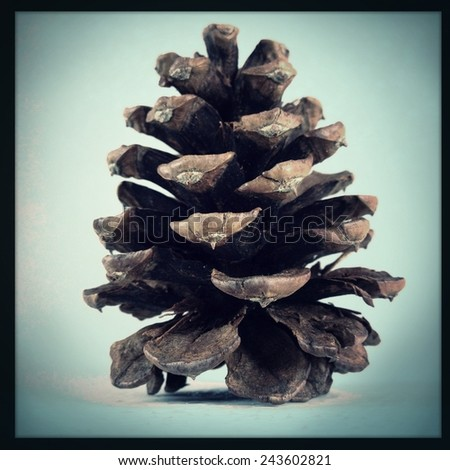 An Instagram filtered image of a pine cone - stock photo