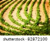 An interesting crop pattern with shallow depth of field - stock photo