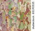 An interesting multicolored tree bark as a background - stock photo