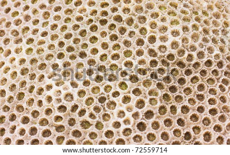 An interesting texture from a closeup of coral rock - stock photo