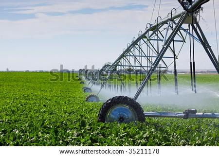 An irrigation pivot watering a field of turnips. - stock photo
