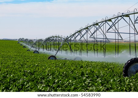 An irrigation pivot watering a field of turnips. - stock photo