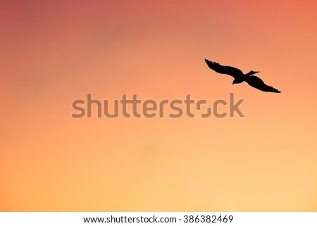 An Isolated Eagle Hovering Across the Sky at Sunset