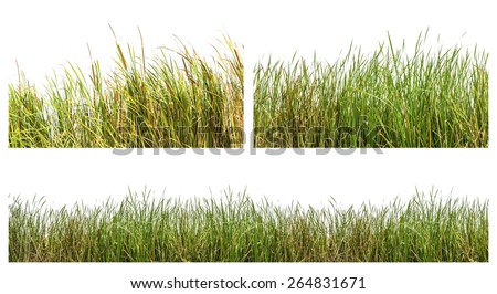An isolated image of green color wild grasses on white background - stock photo