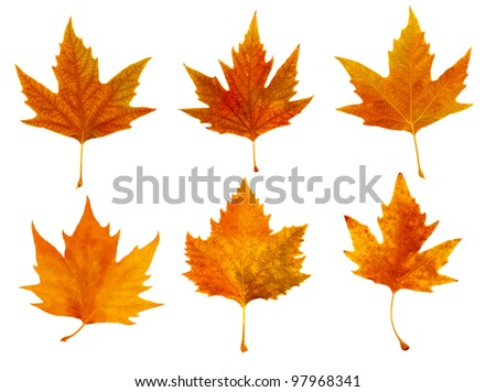 an isolated image of several dried leaves
