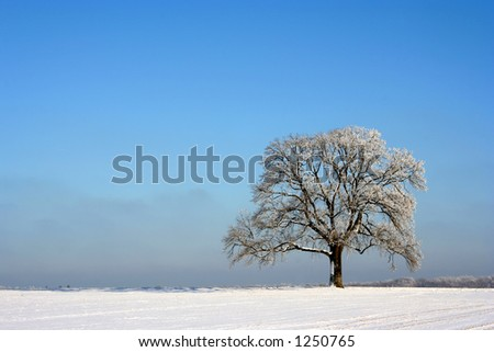 An isolated in winter - stock photo