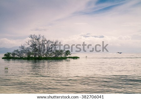 An isolated mangrove tree close to a beach on Lembongan island. The main island of Bali and the cloud covered Gunung Agung volcano are visible in the background. Nusa Lembongan, Bali, Indonesia. - stock photo
