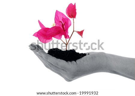 An isolated photo of a flower in soil in a hand