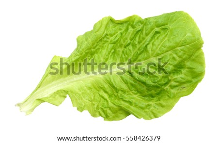 An isolated salad leaf, only