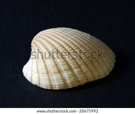 An isolated sea shell on black background.