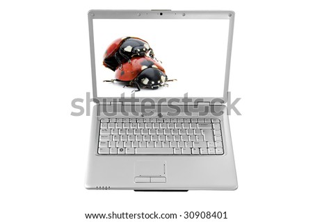 An isolated to white image with clipping paths of a laptop with a mating ladybugs on the screen - stock photo