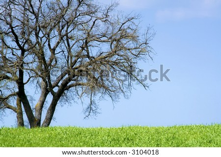 An isolated tree in the sicilian hinterland - stock photo