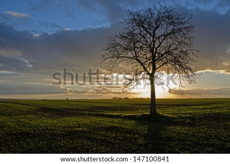 An isolated tree stands in front of the setting sun. Some gray clouds appear above the horizon. The last sunbeams are illuminating the grass field. - stock photo