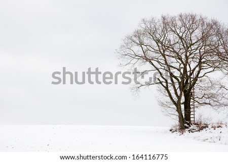 an oak tree used as a Hunting stand in a winter landscape - stock photo