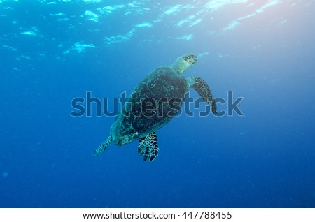 An ocean underwater reef with sun light through water surface and sea turtle - stock photo