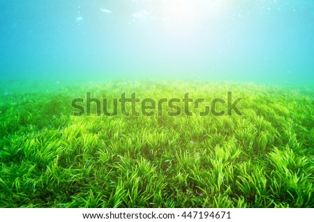 An ocean underwater reef with sun light through water surface. seagrass field - stock photo