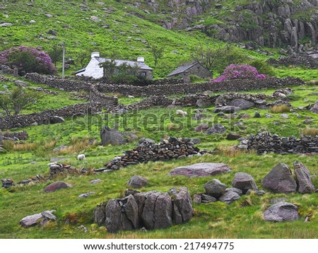 An old cottage stands on a hillside in rural Wales, where mountain sheep graze in rocky fields surrounded by ruined stone walls. - stock photo