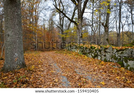 An old country road along a stonewall at autumn in the Swedish province Smaland. - stock photo