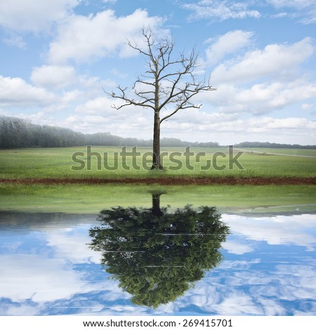 An old dead tree has the reflection of a beautiful big tree. - stock photo