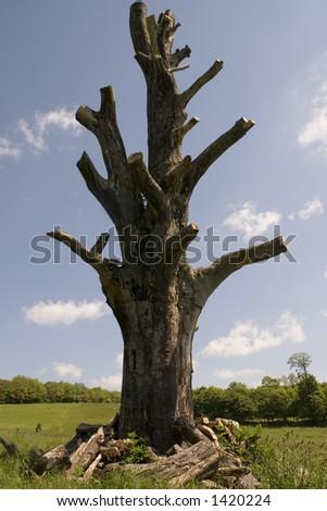An old dead tree in a field - stock photo