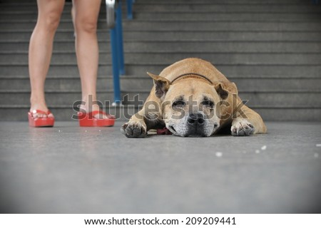 An Old Dog Rests on a City Street - stock photo