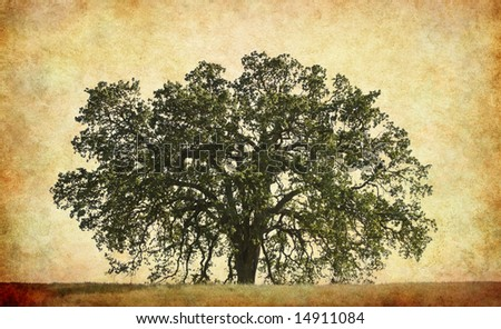 An old oak on a textured paper background. - stock photo
