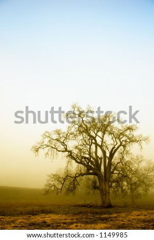 An old oak tree forms a silhoette on a foggy, misty morning.  The rising sun has started to burn the top layer of fog, showing a blue sky above.