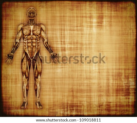 An old parchment featuring the muscles of the human body - 3d render with digital painting. - stock photo