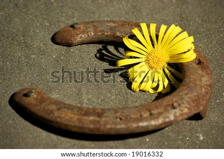 An old, rusty horseshoe and a flower