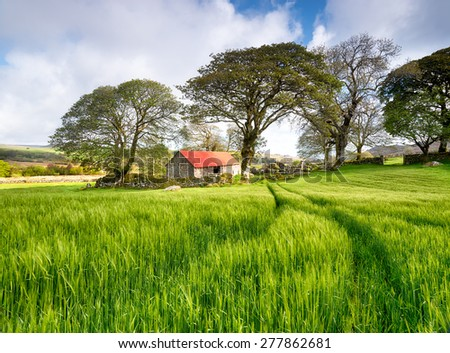 An old stone barn with a red roof in a field of lush green barley - stock photo