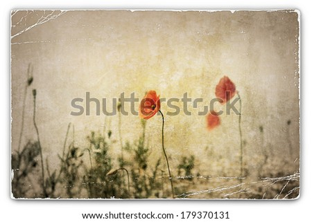 An Old Vintage Photograph of Wild Red Poppies in Field - stock photo