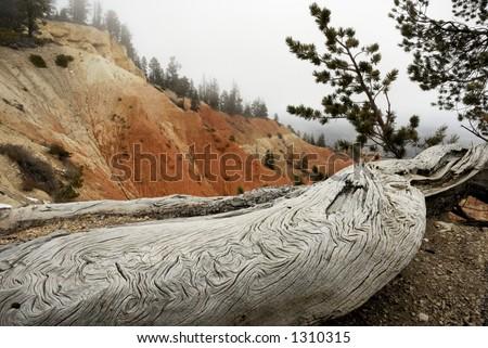An old weathered log sits atop Bryce Canyon, Utah. USA - stock photo