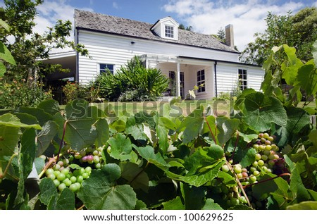 An old wine vineyard during the Spring - stock photo