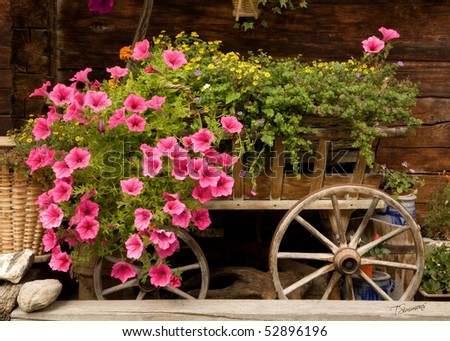 An old wooden cart overflowing with pink petunias and other colorful flowers - stock photo