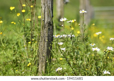 An old, wooden fence post surrounded by flowers