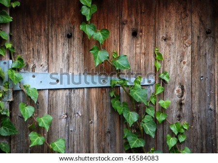 An old wooden ivy-covered door - stock photo