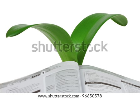 An open book to the growing leaves of lily isolated on white background - stock photo