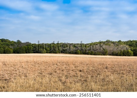 An open field at Dinosaur Valley State Park